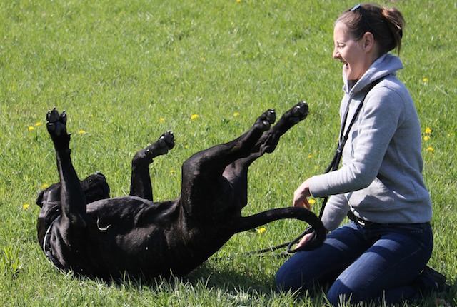 dog-594750_1920.jpg