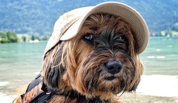 dog-858646_640.jpg