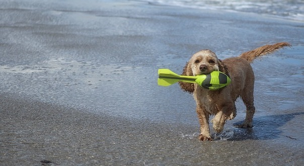 dog-on-beach-1483549_640_1.jpg