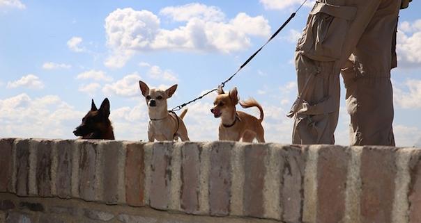dogs-265458_640.jpg