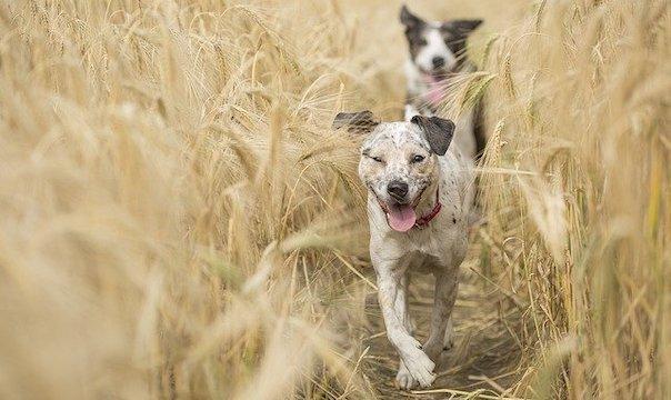 dogs-4688586_640.jpg