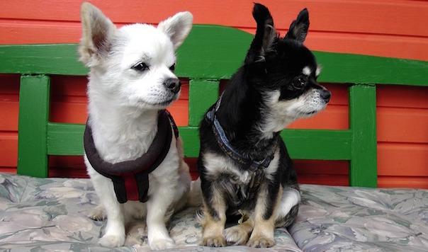 dogs-563670_640.jpg