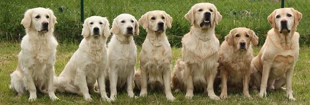 dogs-733956_1280.jpg
