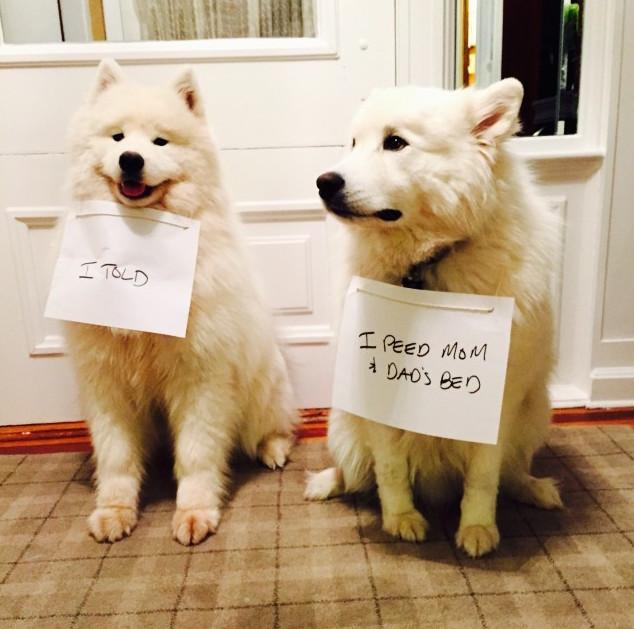 dogshaming_a_gyba_pisile_s.jpg