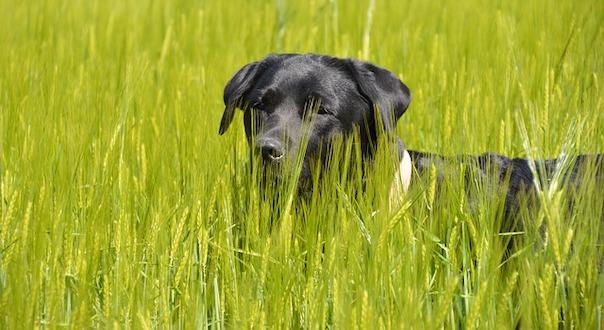 grass-3903542_640.jpg