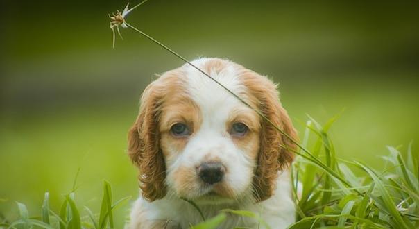 puppy-3613860_640.jpg