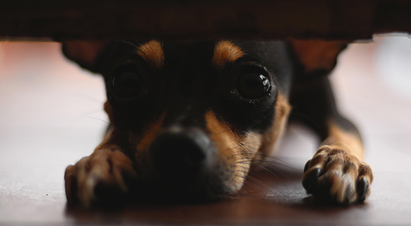 puppy-3947430_1920.jpg