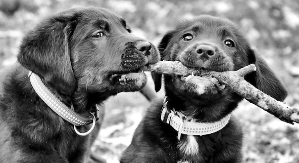 puppy-4016220_640.jpg