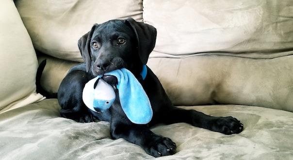puppy-4112121_1280.jpg