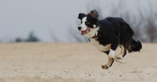 running-dog-747751_640.jpg
