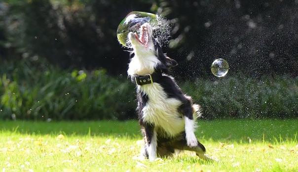 soap-bubbles-672659_640_1.jpg