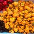 Ezt szedegettem 5 tőről. Remélem igy marad, és jó szezon lesz. :) I picked this up from 5 daggers. I hope it will stay and will be a good season. :) #spicy #food #capsaicin #moruga #reaper #chocolatescorpion #yellow #red #chocolate #chili #sauce #nyúlközség #hungary #kisalföld #nyulituzes
