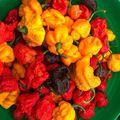 Érés folyamatban. :) #reaper #yellow  #moruga #scorpion #orange #chocolate  #chili #pepper  #food #sauce #ultrahot #nyúlközség  #nyulituzes #kisalföld #hungary