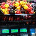 Tiszta súlya 3,5 kg. Reaper, tr. moruga scorpion red és yellow,  chocolate scorpion, orange Butch T.scorpion. Szabadföldi, 30 tő. Fullon van zölddel még. Szeretem. :) #szüret #garden #reaper #scorpion #moruga #chocolate #orange #red #yellow #chili #pepper #hot #ultrahot #magyargazda #kistermelő #hun #hungary #kisalföld #nyúlközség #nyulituzes