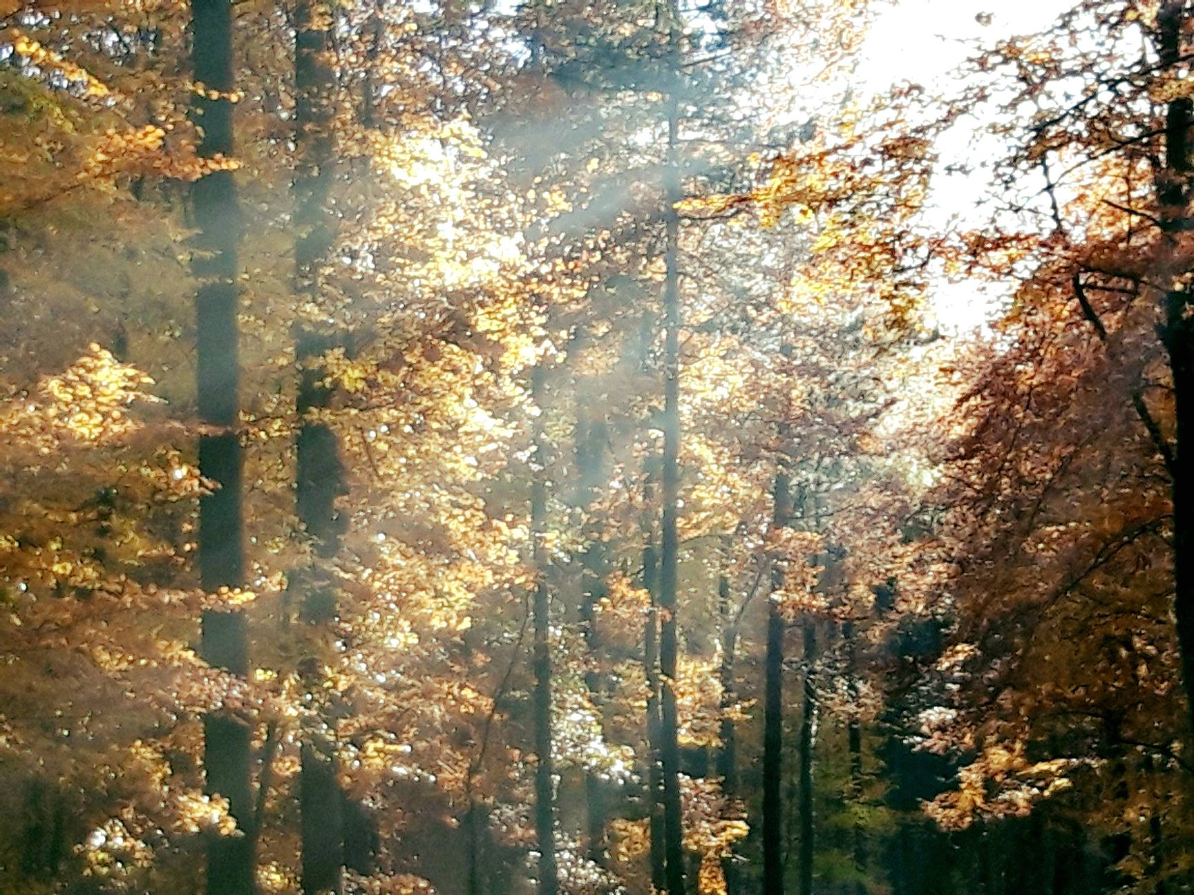 3ffec794c6 A futónarkósok kedelt drogja az őszi avarszag. /Fotók: Tompahawk