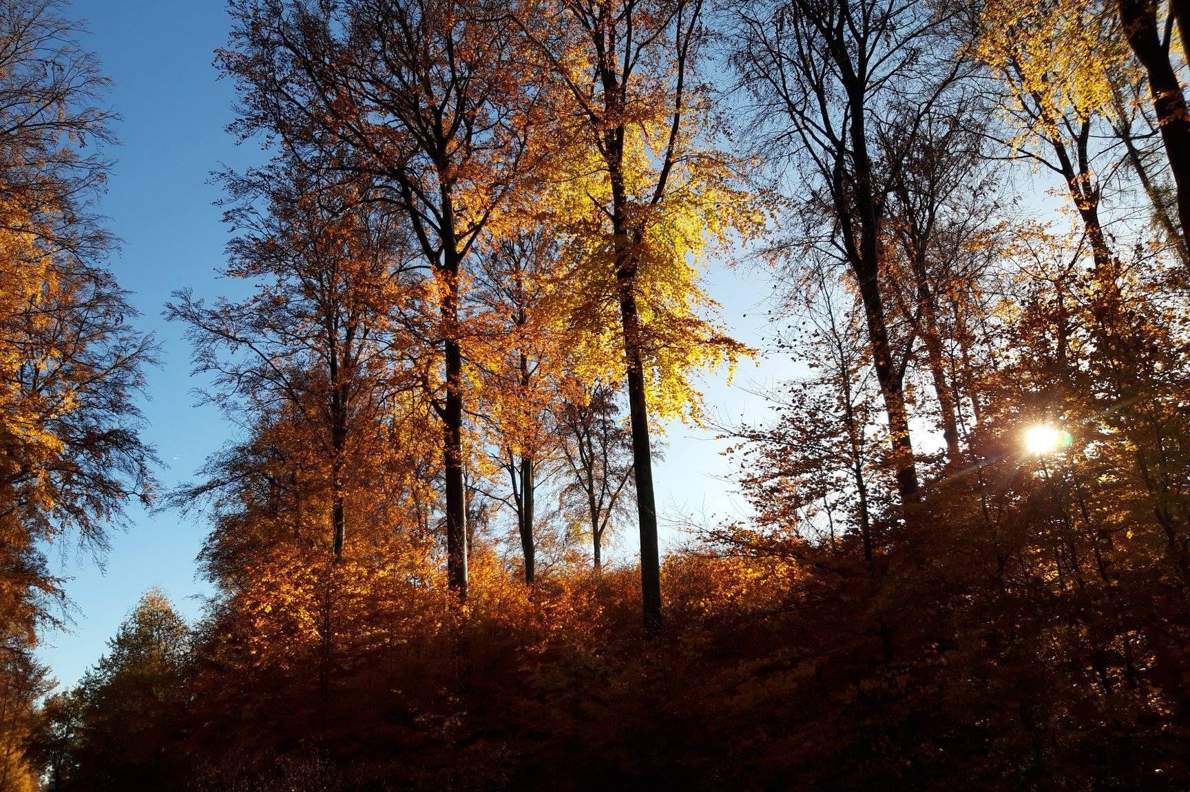 A futónarkósok egyik kedvelt drogja az őszi avarszag