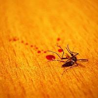 Malária és társai