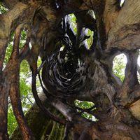 Fojtofuge lepcsohaz es lombkorona hidak, Monteverde III 0807