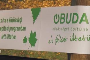 Környezetvédelmi program egy zöldebb kerületért