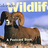 ((INSTALL)) Colorado Wildlife: A Postcard Book (Postcard Books). Opciones Iberico Interest recruit Ultra startup