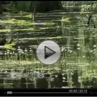 Film Ócsáról (20perc)