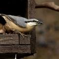 Gondoskodás kerti madarainkról az új esztendőben is