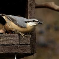 Gondoskodás kerti madarainkról