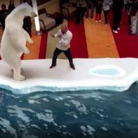 Simogass bálnát, verekedj jegesmedvével!