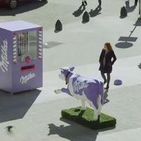 Az elem, a tehén és az emberi lánc csodái