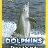 Delfinek ...nem mindig szelídek