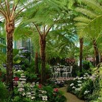 A belga királyi palota csodálatos botanikus kertje