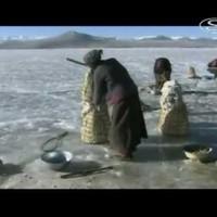 Tibet tava