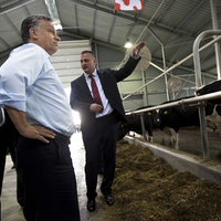 Ebben az országban disznók, tehenek, lovak többet érdemelnek mint az emberek, akiknek se Balaton, se bérlakás de még közklotyó sem jár!