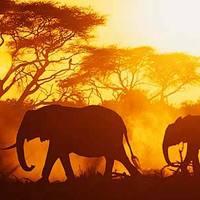 Afrika: Kenya