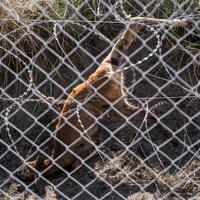 71 migráns fulladt meg az autó rakterében - összefoglaló hírmorzsák