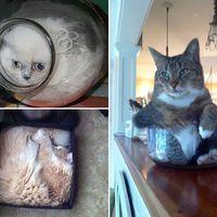 Macskák...