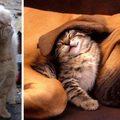 Ezek a macskák a kutyákat is megbolondították :-))