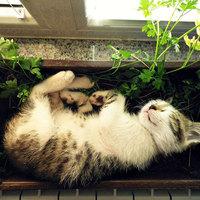 Pihen a macska