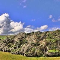 Ahol a fák is földig hajolnak -  Slope Point Új-Zéland