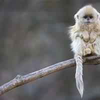 Alig ismert állatok, melyek a kihalás szélén vannak