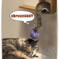 Elképesztő állatok :)))