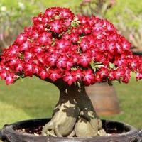 Apró csodák: bonsai fák és díszei