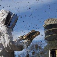 A méhek millió tüntek el a föld színéről