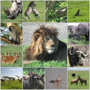 kenya-africa-safari-big-five-300x300.jpg