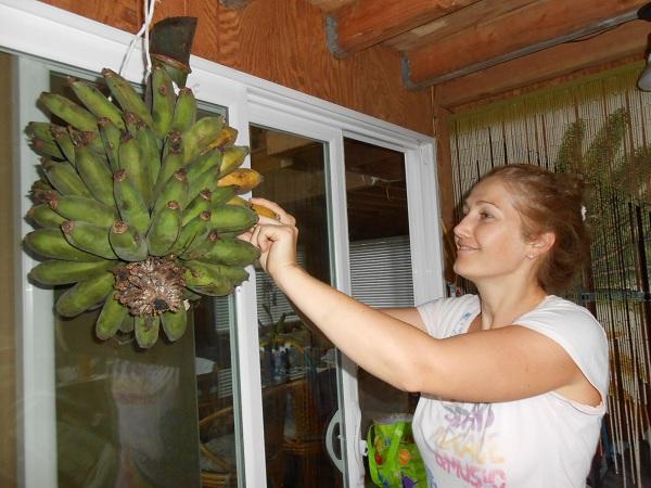 banán1.jpg