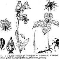 Kölni levelek és egyéb virágok. Rózsa Sándor összes írásai - 1.