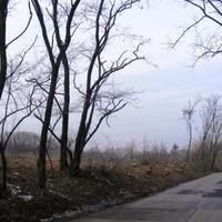 Rékai Anett 6.c : Az erdőnk védelmében