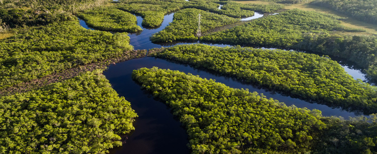 south_america_brazil_ariel_amazon_river-mh.jpg