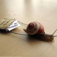 Megint levelet hozott a posta!