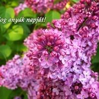 Virágos anyák napja